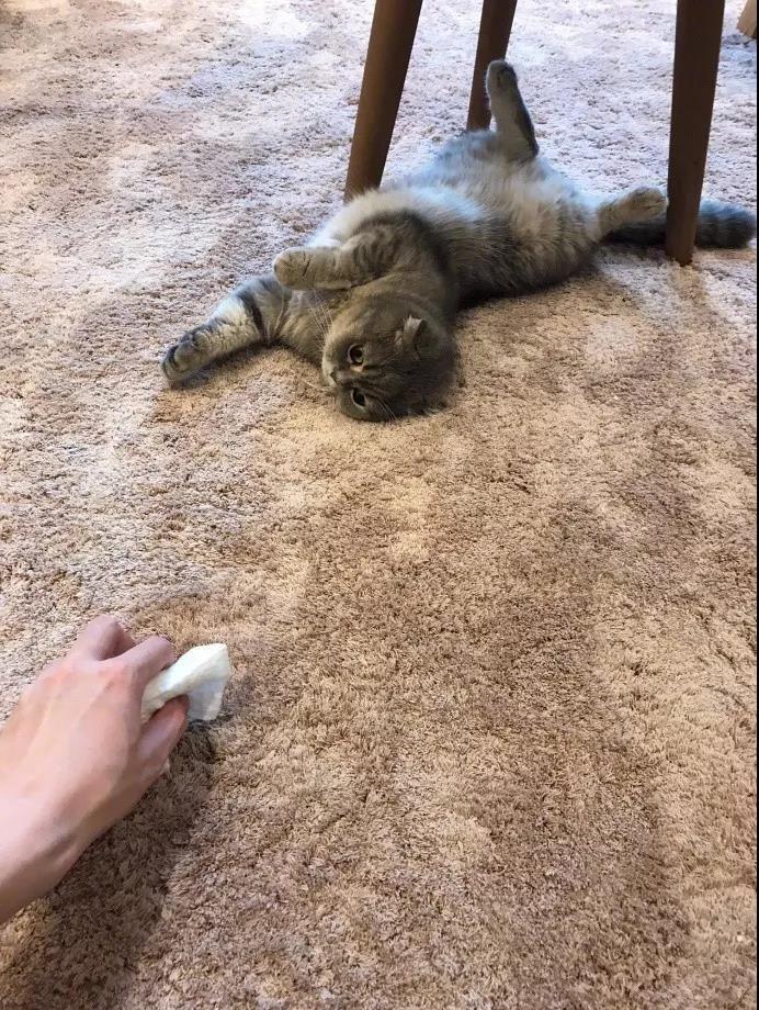 地毯清洗之猫拉在地毯上的处理过程分为七步请注意最后一步